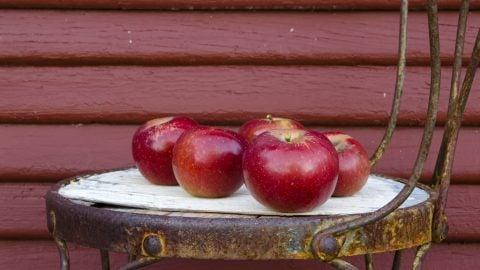 Svigermors æblekage