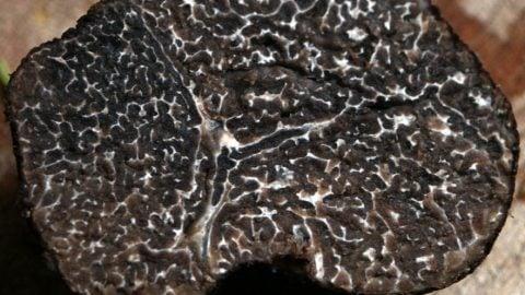 Trøfler