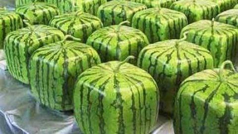 Muskelømhed – vandmelon