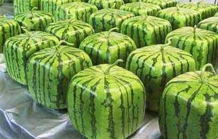 Muskelømhed - vandmelon 3