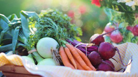 Lav lækre måltider med en god køkkenhave